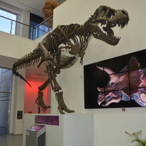 Свет диносауруса