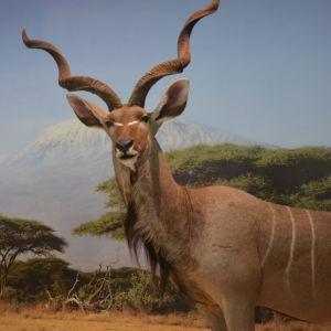 Животиње Африке